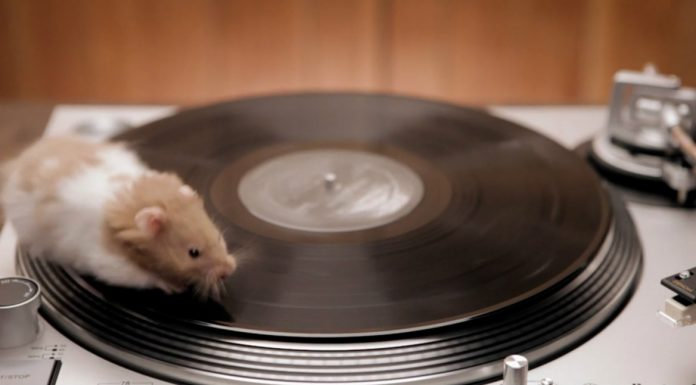 rodents on turntables, a live nation commercial