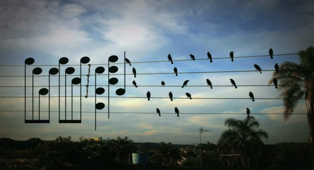 birds on the wires, jarbas agnelli project