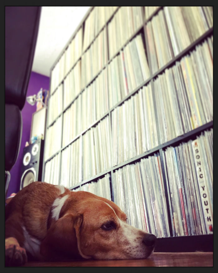 eric dog and records